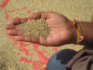 grain-hand