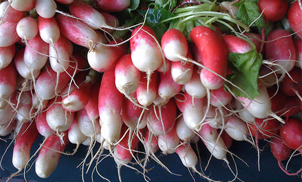 radishes-crop